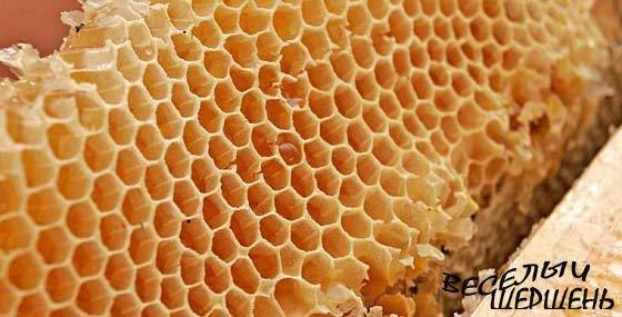 Полезные свойства меда. Мед как стимулятор работоспособности