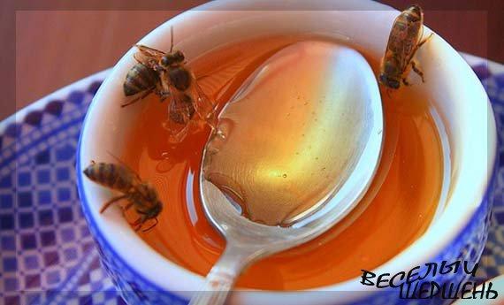 Чем полезен мед? - Мы отвечаем...