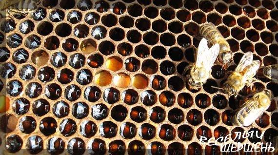 Применение пчелиной пыльцы и перги - Залог здоровья и долголетия