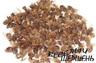 Лечение аденомы пчелиным подмором пчел