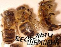 Эффективное лечение суставов пчелиным подмором