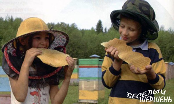 Лечебное применение меда