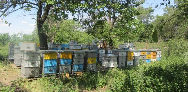 Пчелиная пыльца детям - залог крепкого иммунитета