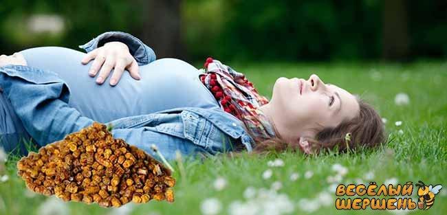 Как принимать пергу при беременности. Противопоказания