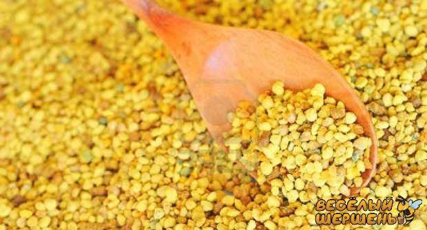 Как собирают пчелиную пыльцу пчелы