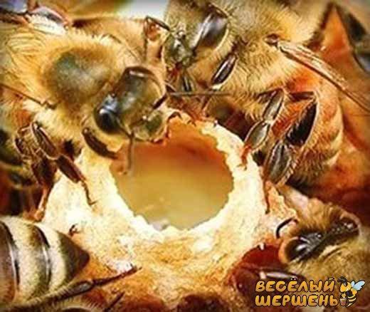 применение пчелиного маточного молочка