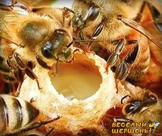 состав пчелиного маточного молочка