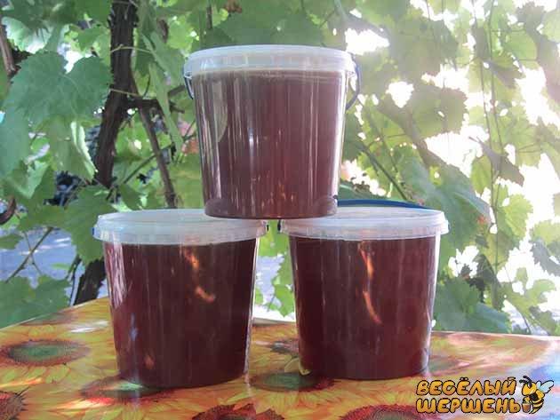 Купить в Украине гречишный мед: полезные свойства и противопоказания