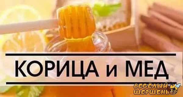 полезные свойства для организма человека в применении корицы с медом