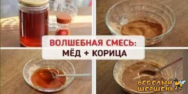 польза и вред для сердца корицы с медом