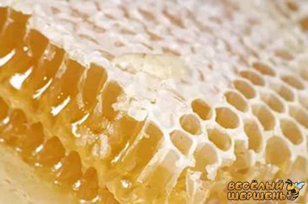 як зберігати мед в сотах