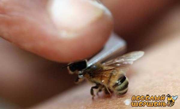 чи безпечне лікування укусами бджіл