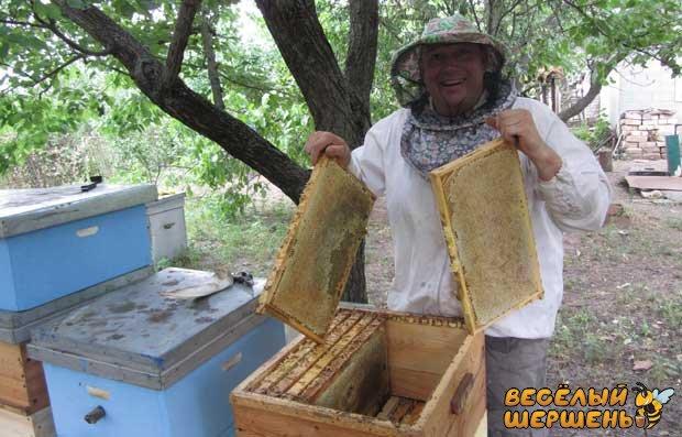 Скільки меду дає один вулик - пасічник віповідає