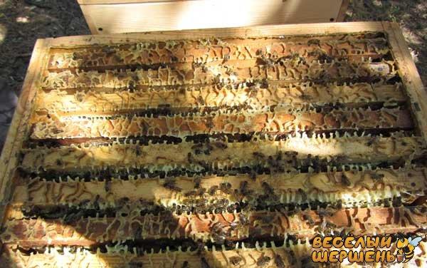 скільки меду з однієї рамки