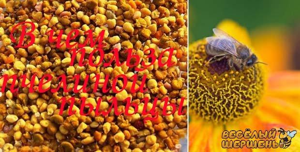 Як вживати бджолиний пилок. Пасічник відповідає