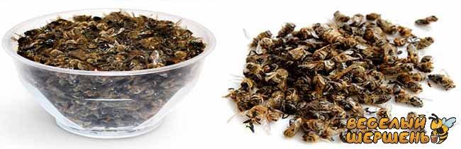 Лікувальні властивості бджолиного підмору. Що лікує підмор